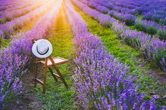 A chair with a hanged over hat between the blooming lavender rows under the summer sunset rays. Dream and relax concept. Royalty Free Stock Image