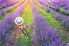 A chair with a hanged over hat, an open book and a bunch of lavender flowers between the blooming lavender rows under the summer s. Unset rays. Dream and relax Royalty Free Stock Photo