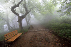 Chair and hiking trail in the fog. Hiking trail in the fog with a chair stock photo