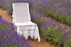 Chair in Lavanders. Chair is put in Lavanda field Stock Photography