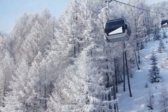 Chair lift between firs in winter mountains Royalty Free Stock Image