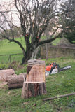 Chair made with a chainsaw from a tree trunk Stock Photo