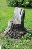 Chair of old dry stump on green grass royalty free stock photo
