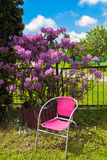 Chair and rhododendron in the garden Royalty Free Stock Photography