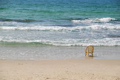 Chair & sea. A chair on the background of the sea Stock Photography