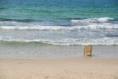 Chair & sea Stock Photography