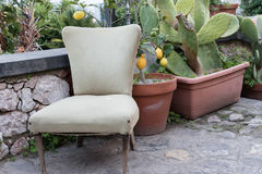 The chair in the terrace between plants. The empty chair in the garden with lemon trees and prickly pear Stock Photography