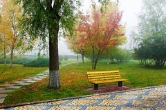 The chair under the tree in fog Stock Images