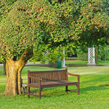 Chair under the tree. In the morning Stock Photos