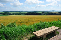 Chair and wheat field and blue sky Royalty Free Stock Images