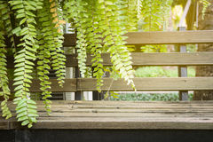Chair. Wooden chair with green leaves under yellow light Royalty Free Stock Photos