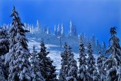 Chairlifts Sking χιονώδη δέντρα Snoqualme στο πέρασμα Ουάσιγκτον στοκ φωτογραφία