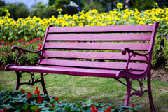 Chairs in flower garden. Background Royalty Free Stock Photo