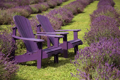 Chairs and lavender Stock Photography