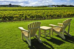 Chairs overlooking vineyard Royalty Free Stock Photography
