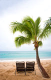 Chairs and palm tree. Two chairs under baby palm tree on tropical beach Stock Photo