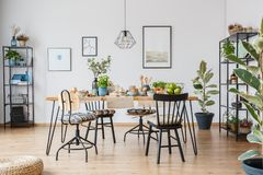Spacious dining room interior. Chairs at table with food in spacious dining room interior with ficus and posters on white wall stock photography