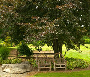 Chairs under tree Royalty Free Stock Photo