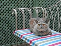 Chaise di razza di lusso del giardino del gatto fotografia stock libera da diritti