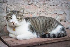 Chaise en bois de Cat Laying Down Leisure On Photographie stock libre de droits
