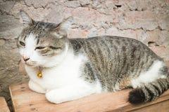 Chaise en bois de Cat Laying Down Leisure On Photo libre de droits