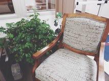 Chaise et usine photographie stock
