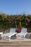Chaise-longue on the background of bougainvillea Royalty Free Stock Photos
