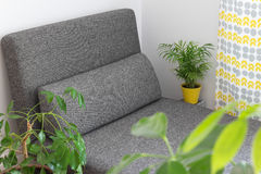 Chaise longue and plants in the living room. Gray chaise longue and lots of green plants in the living room Royalty Free Stock Photos