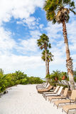 Chaise Lounges Along Sandy Stretch of Beach. Chaise lounges on a sandy beach under palm trees stock photos