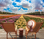 Chaise lounges in the meadow with flowers royalty free stock photos
