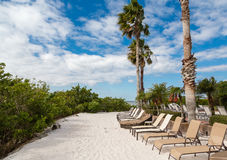Chaise Lounges on Tropical Sand. Chaise lounges on a sandy beach under palm trees royalty free stock image