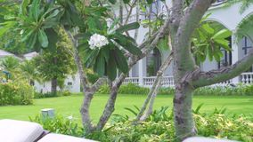 Chaise lounges and umbrella on background luxurious villa and green lawn. Deck chairs on green lawn and white cottage. Landscape. resort hotel territory stock footage