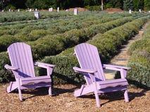 Chaises d'Adirondack de lavande dans un jardin de lavande Photographie stock libre de droits
