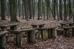 Chaises dans la forêt Images stock
