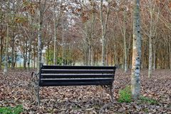 Chaises dans le jardin chez Rai Chern Tawan Photographie stock libre de droits