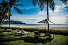 Chaises de plage sur la pelouse sous des palmiers, derrière eux Photos stock