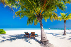 Chaises de plate-forme sous des umrellas et palmiers sur une plage Image stock