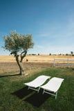 Chaises longues de tourisme de pays et portrait d'arbre Photographie stock