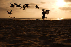 Chasing Seagulls Stock Images