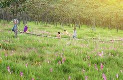 Chaiyaphum, Thailand - 4 Augustus, 2016: Mensen die Siam Tulip bezoeken Royalty-vrije Stock Foto