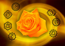 Chakra around rose. A yellow rose with a whirl effect background with symbols of chakras all around vector illustration