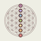 Chakra icons on sacred geometry design. Zen concept illustration, seven main chakra icons placed on flower of life sacred geometry design. EPS10 vector Stock Images