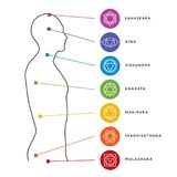 Chakra system of human body. Energy centers. Chakra system of human body chart. Seven chakra symbols. Location information of each chakra. Chakra centers Stock Image