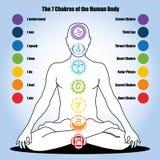 7 chakras av människokroppen Royaltyfri Foto