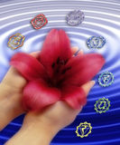 Chakras with lily. Female hands holding a lily flower over a blue rippled surface surrounded by symbols of chakras Royalty Free Stock Photography