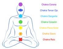 Chakras Man Description Spanish. Seven main chakras beaded along the corresponding body regions of a meditating man. Vector illustration over white background Royalty Free Stock Images