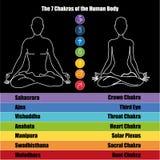 7 chakras. Seven chakras of the Human body Royalty Free Stock Image