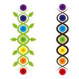 Chakras. The seven chakras and the kundalini snake Vector Illustration