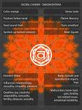 Chakras-Symbole mit den Bedeutungen infographic Lizenzfreie Stockfotos