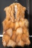 Chaleco de la piel de Fox Fotografía de archivo libre de regalías